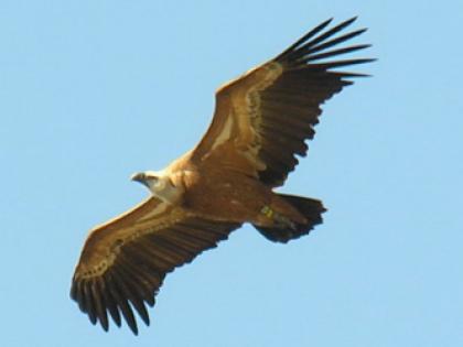 הנשר הגדול ויער הציפורים